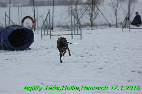 Agility Tana, Hollie,Hannach 17.1.2016 (92)