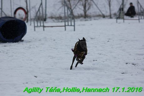 Agility Tana, Hollie,Hannach 17.1.2016 (93)