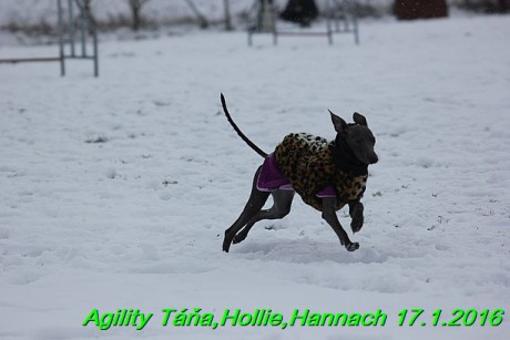 Agility Tana, Hollie,Hannach 17.1.2016 (94)