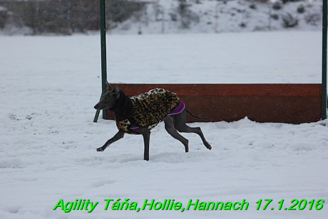 Agility Tana, Hollie,Hannach 17.1.2016 (95)