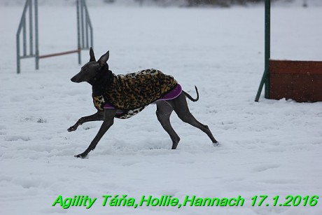 Agility Tana, Hollie,Hannach 17.1.2016 (96)