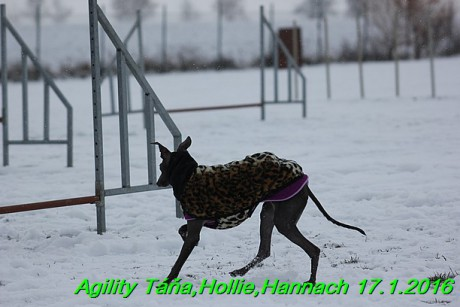 Agility Tana, Hollie,Hannach 17.1.2016 (97)