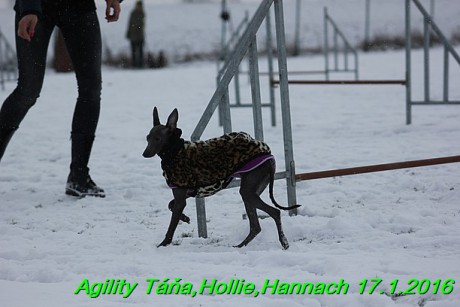 Agility Tana, Hollie,Hannach 17.1.2016 (98)