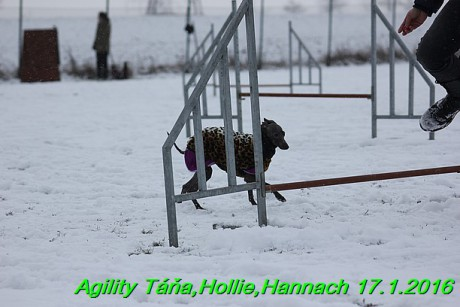 Agility Tana, Hollie,Hannach 17.1.2016 (99)