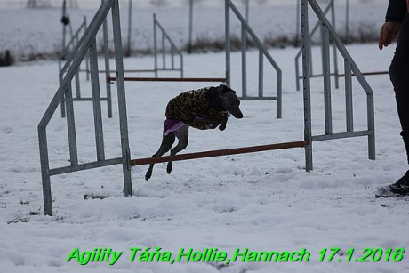 Agility Tana, Hollie,Hannach 17.1.2016 (100)