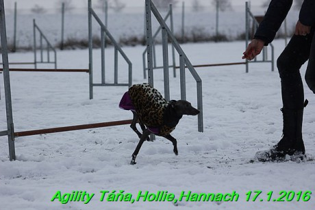 Agility Tana, Hollie,Hannach 17.1.2016 (101)