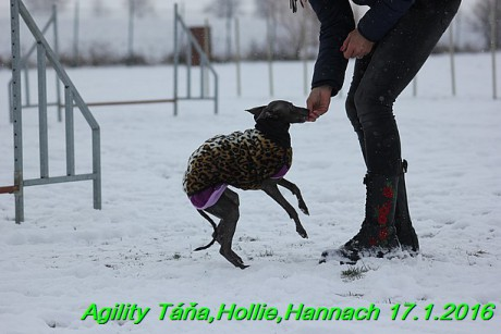 Agility Tana, Hollie,Hannach 17.1.2016 (102)