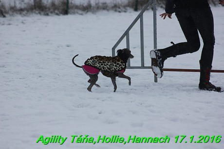 Agility Tana, Hollie,Hannach 17.1.2016 (103)