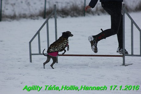 Agility Tana, Hollie,Hannach 17.1.2016 (104)