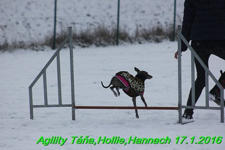 Agility Tana, Hollie,Hannach 17.1.2016 (105)