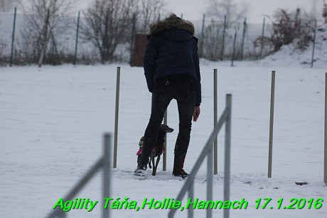Agility Tana, Hollie,Hannach 17.1.2016 (106)
