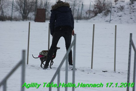 Agility Tana, Hollie,Hannach 17.1.2016 (107)