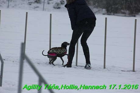 Agility Tana, Hollie,Hannach 17.1.2016 (108)