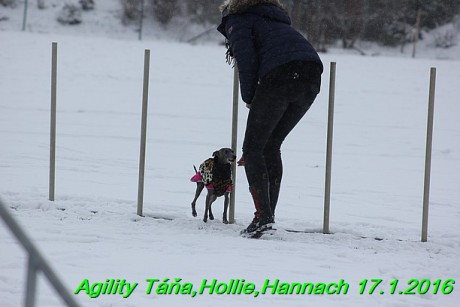 Agility Tana, Hollie,Hannach 17.1.2016 (109)