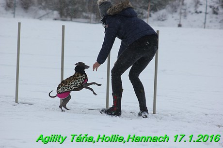 Agility Tana, Hollie,Hannach 17.1.2016 (110)