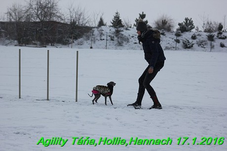 Agility Tana, Hollie,Hannach 17.1.2016 (111)