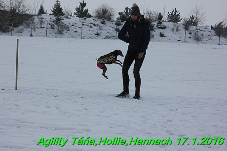 Agility Tana, Hollie,Hannach 17.1.2016 (112)