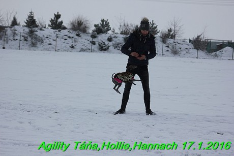Agility Tana, Hollie,Hannach 17.1.2016 (113)