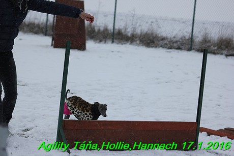 Agility Tana, Hollie,Hannach 17.1.2016 (114)