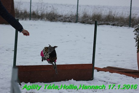 Agility Tana, Hollie,Hannach 17.1.2016 (115)