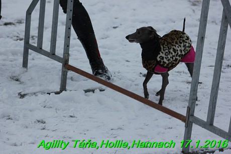 Agility Tana, Hollie,Hannach 17.1.2016 (116)
