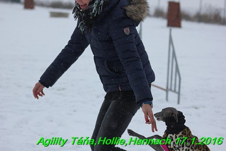 Agility Tana, Hollie,Hannach 17.1.2016 (117)