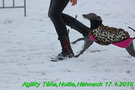 Agility Tana, Hollie,Hannach 17.1.2016 (118)