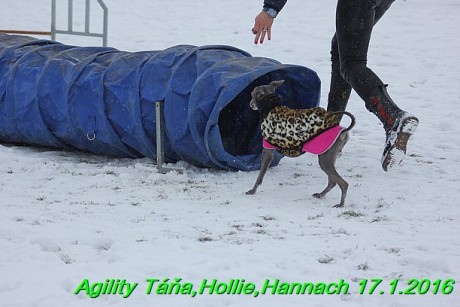 Agility Tana, Hollie,Hannach 17.1.2016 (119)