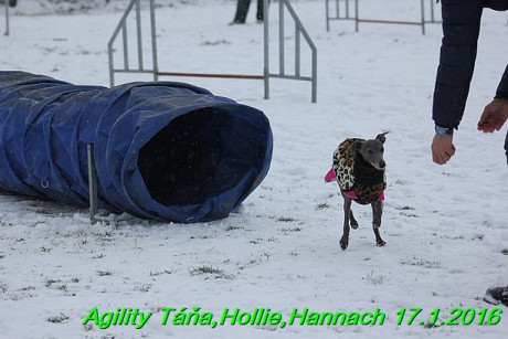 Agility Tana, Hollie,Hannach 17.1.2016 (120)