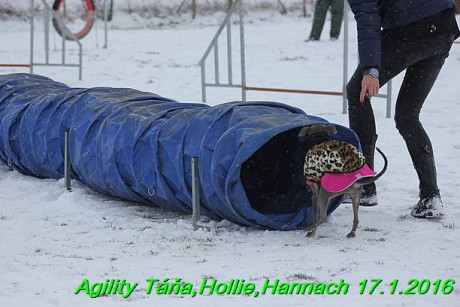Agility Tana, Hollie,Hannach 17.1.2016 (121)
