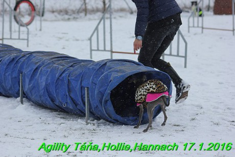 Agility Tana, Hollie,Hannach 17.1.2016 (122)