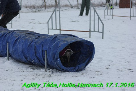 Agility Tana, Hollie,Hannach 17.1.2016 (123)