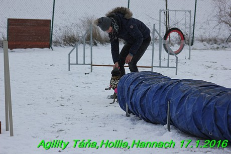 Agility Tana, Hollie,Hannach 17.1.2016 (124)