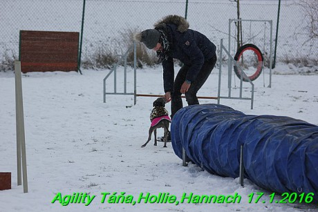 Agility Tana, Hollie,Hannach 17.1.2016 (125)