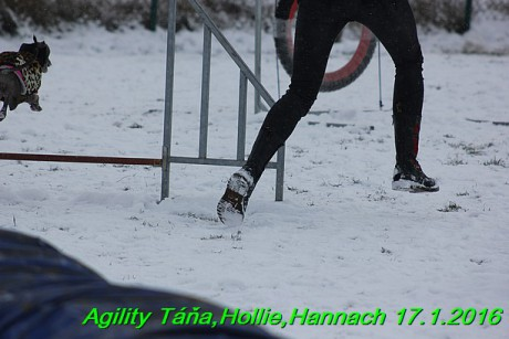 Agility Tana, Hollie,Hannach 17.1.2016 (127)