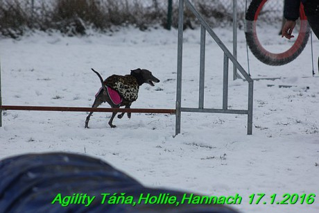 Agility Tana, Hollie,Hannach 17.1.2016 (128)