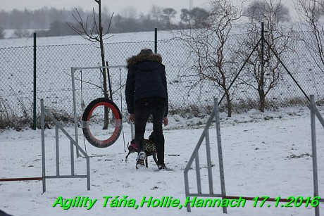 Agility Tana, Hollie,Hannach 17.1.2016 (129)