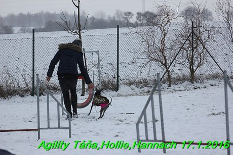 Agility Tana, Hollie,Hannach 17.1.2016 (130)