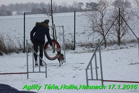 Agility Tana, Hollie,Hannach 17.1.2016 (131)