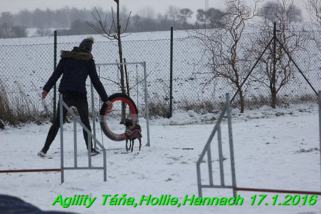 Agility Tana, Hollie,Hannach 17.1.2016 (132)