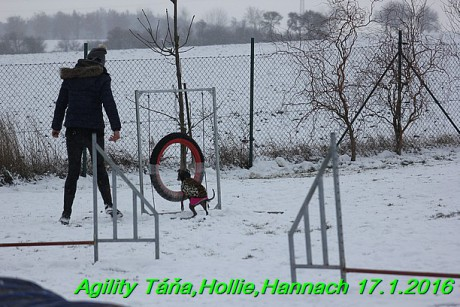 Agility Tana, Hollie,Hannach 17.1.2016 (133)