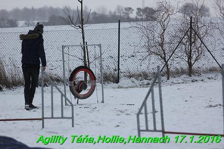 Agility Tana, Hollie,Hannach 17.1.2016 (134)