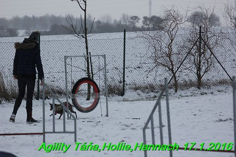 Agility Tana, Hollie,Hannach 17.1.2016 (135)