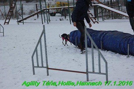 Agility Tana, Hollie,Hannach 17.1.2016 (136)