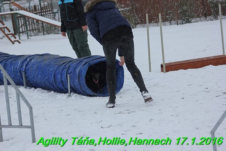 Agility Tana, Hollie,Hannach 17.1.2016 (137)