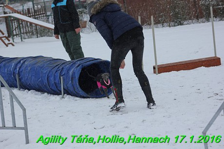 Agility Tana, Hollie,Hannach 17.1.2016 (138)