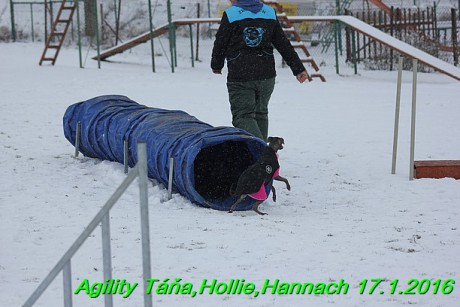 Agility Tana, Hollie,Hannach 17.1.2016 (139)