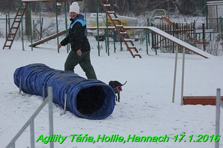 Agility Tana, Hollie,Hannach 17.1.2016 (140)