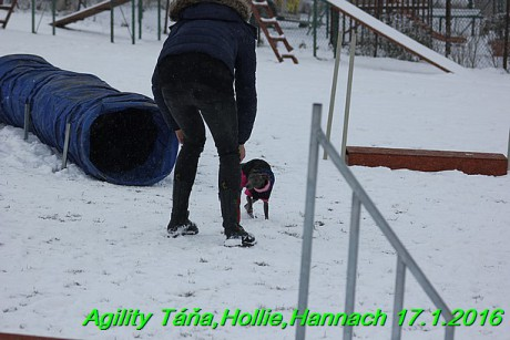 Agility Tana, Hollie,Hannach 17.1.2016 (141)