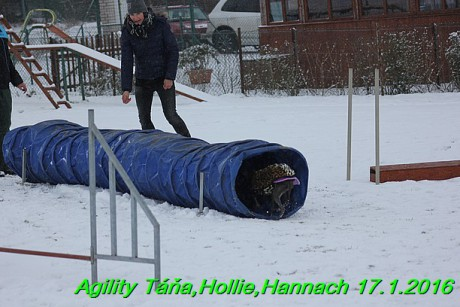 Agility Tana, Hollie,Hannach 17.1.2016 (142)